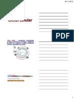 Ciclul celular.pdf