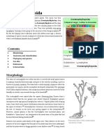 Zosterophyllopsida
