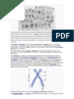 Cromosomas Concepto y de Plantas Animasles