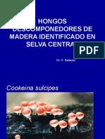 Hongos Selva Central (1)