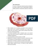 Características de Las Células (1)