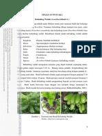 belimbing wuluh.pdf