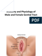 Anatomi Genitalia Pria Wanita