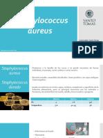 3. Staphylococcus Aureus
