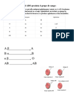 PLANSA hematologie