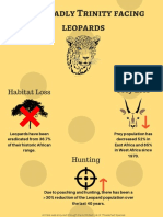 the dangerous trinity facing leopards-final