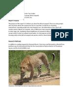 informal tech report-leopards-revised version-final