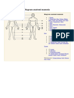Diagram anatomi manusia.docx