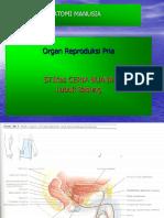 ANATOMI KBK 8. Organ Reproduksi Pria