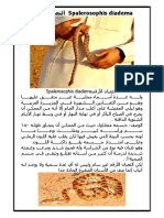 Spalerosophis Diadema الثعبان الأرقم