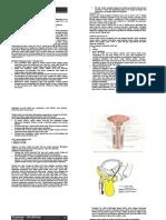 Urethrae-RD2002