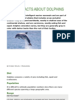 Basic Facts About Dolphins