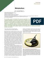The Meter of Metabolism