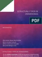 Estructura y Tipos de Cromosomas