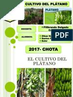 Cultivo Del Platano Diapositivas