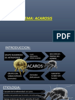 ciclo biologico acarosis