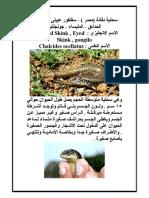 سحلية دفانة (مصر ) - سقنقور عيينى أو سقنقور الحدائق - المليساء - جونجلتية