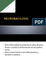7. NECROBACILOSIS