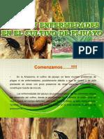 PLAGAS Y ENFERMEDADES EN PIJUAYO.pptx