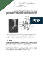 Práctica n5 Biomecánica de La Rodilla