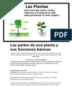 Las partes de una planta y sus funciones básicas.docx