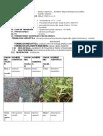 Datos de Contaminación Autoguardado3