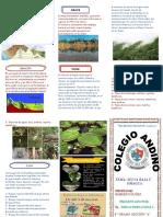 Triptico Selva Baja u Omagua