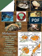 Moluscos - PH
