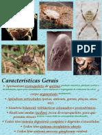 Artrópodes P1 - PH