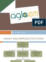 Class12th_HUMAN-REPRODUCTION.pdf