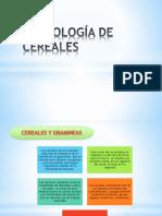 DIAPOS-TECNOLOGIA-DE-CEREALES.pptx