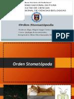 Orden Stomatopoda