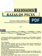 generalidadesyrazasdepeces-111228172104-phpapp01