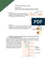 Célula y Funciones