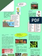 Bioindicador (1)