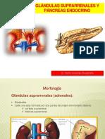 Anatomía Glándula Suprarrenal y Páncreas Endocrino