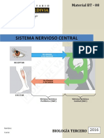 Sistema Nervioso Central WEB