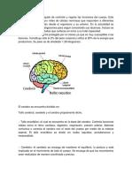 El cerebro es el encargado de controlar y regular las funciones del cuerpo.docx