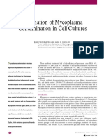 Mycoplasma Contamination