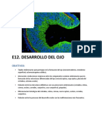 Embriologia Ojo