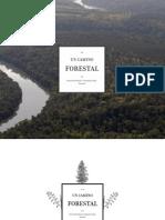Un Camino Forestal_web