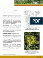 yareta.pdf