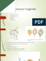 t Vaginalis Para