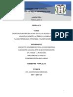 Radiologia Grupos 1-5