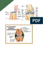 Anatomi Sendi.docx
