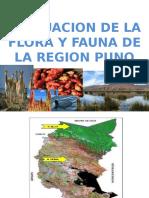 287612527 Evaluacion de La Flora y Fauna Medely