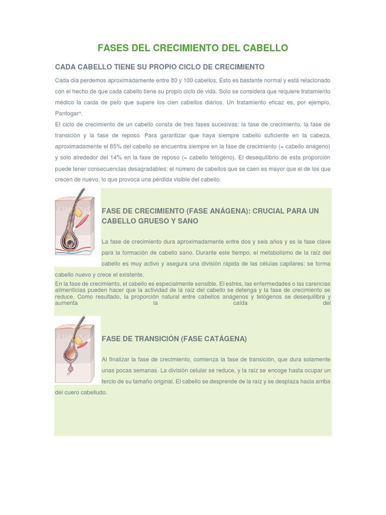 Fases Del Crecimiento Del Cabello