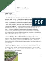 -Cultivo-del-Arandano-1-1
