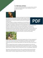 Historia Del Noni o Morinda Citrifolia