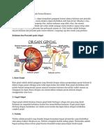 30 Kelainan Dan Penyakit Pada Sistem Ekskres1